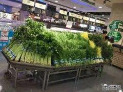 实操|蔬菜如何保鲜控损?