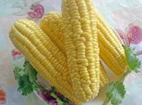 万博manbetx客服玉米